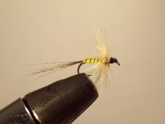 le petit palmer de base...une grise a corp jaune