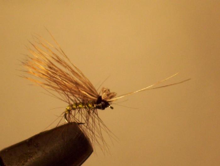 un sedge corps en soie polyfloss verte ,cerclé d'un hackle noir, maintenu par un fil doré antenne en rachi et petite aile en chevreuil