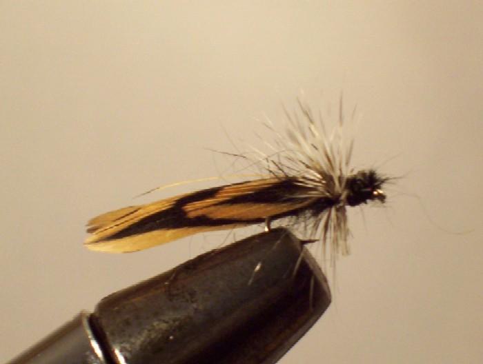 l'insecte en aile de bécasse...