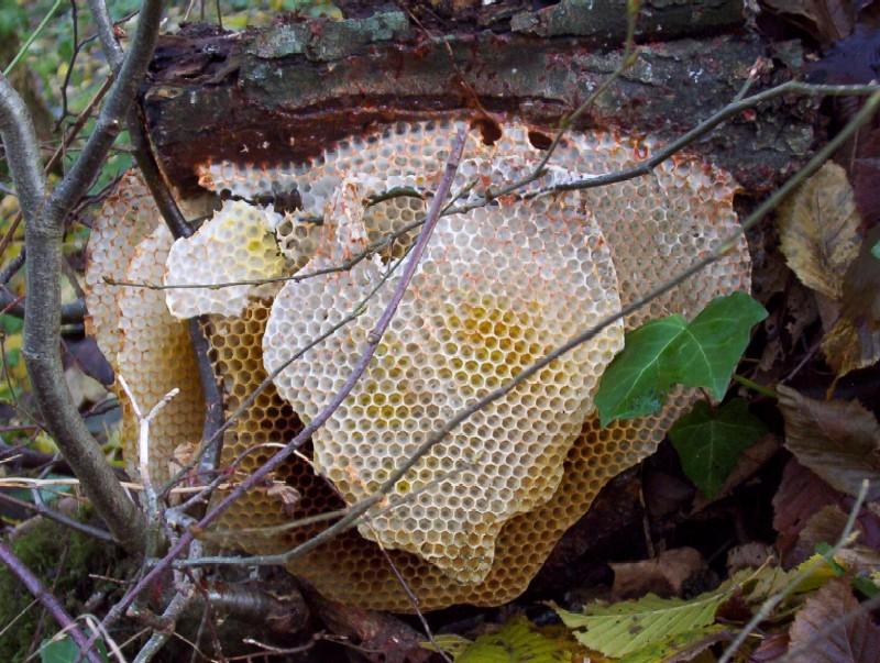 la ruche ....au ras du sol!!!