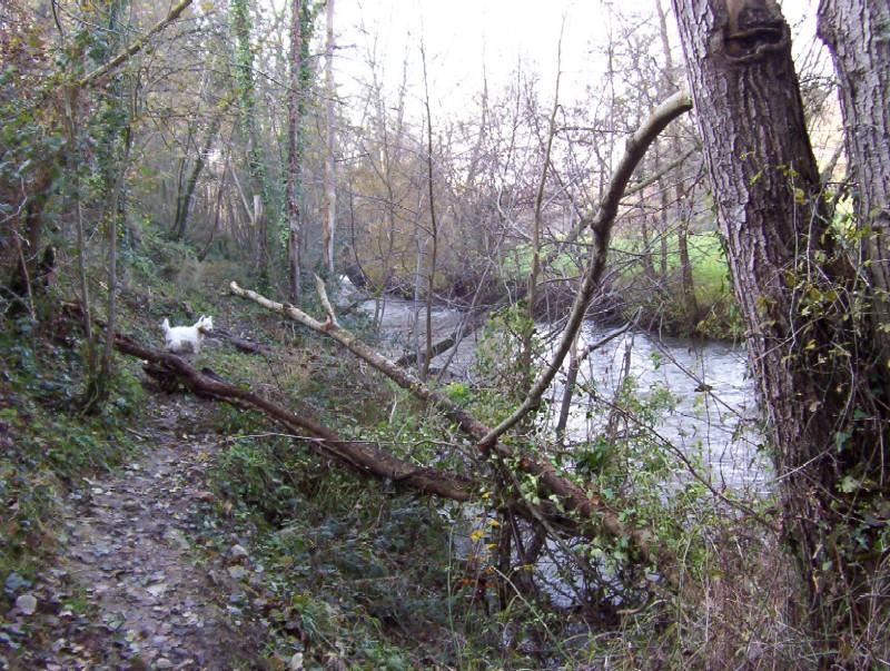 après la tempète....nico il va y avoir du taf pour sortir tous les arbres de l'eau.....