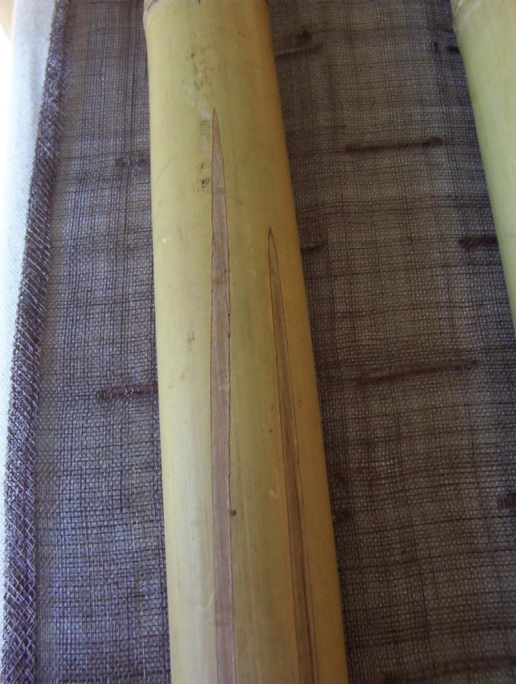 le bambou tant attendu en provenance d'Allemagne